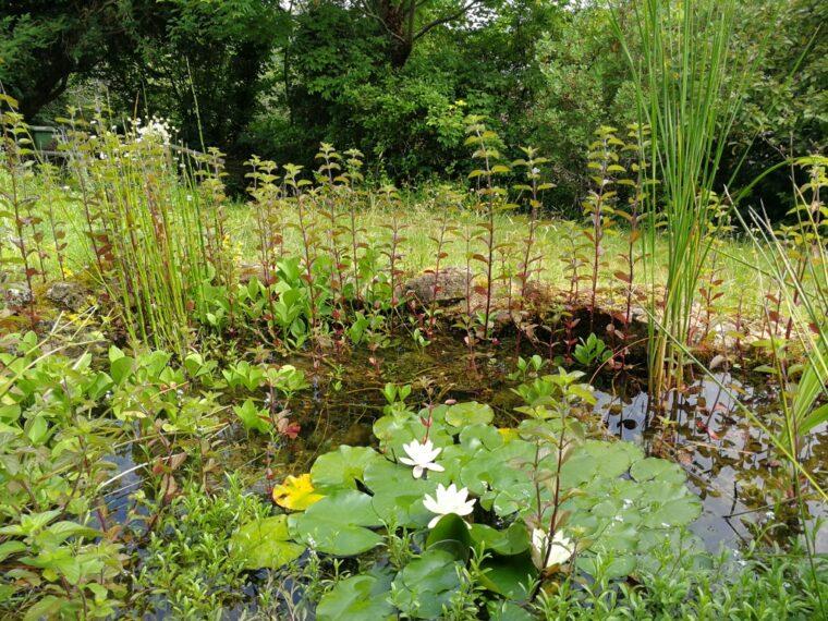 Three years later | Wildlife Pond | Wild About Bath