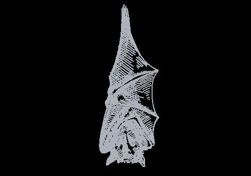 bat illustration | Wild about Bath