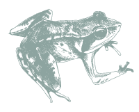 frog | Wild about Bath