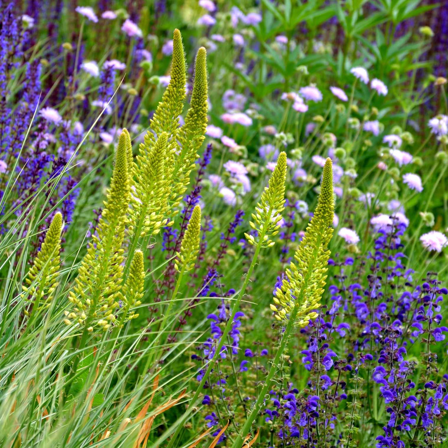 Garden tips | Wild about Bath