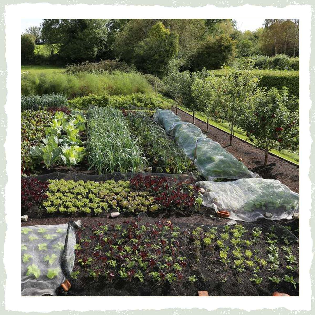 No Dig Gardening | Wild about Bath