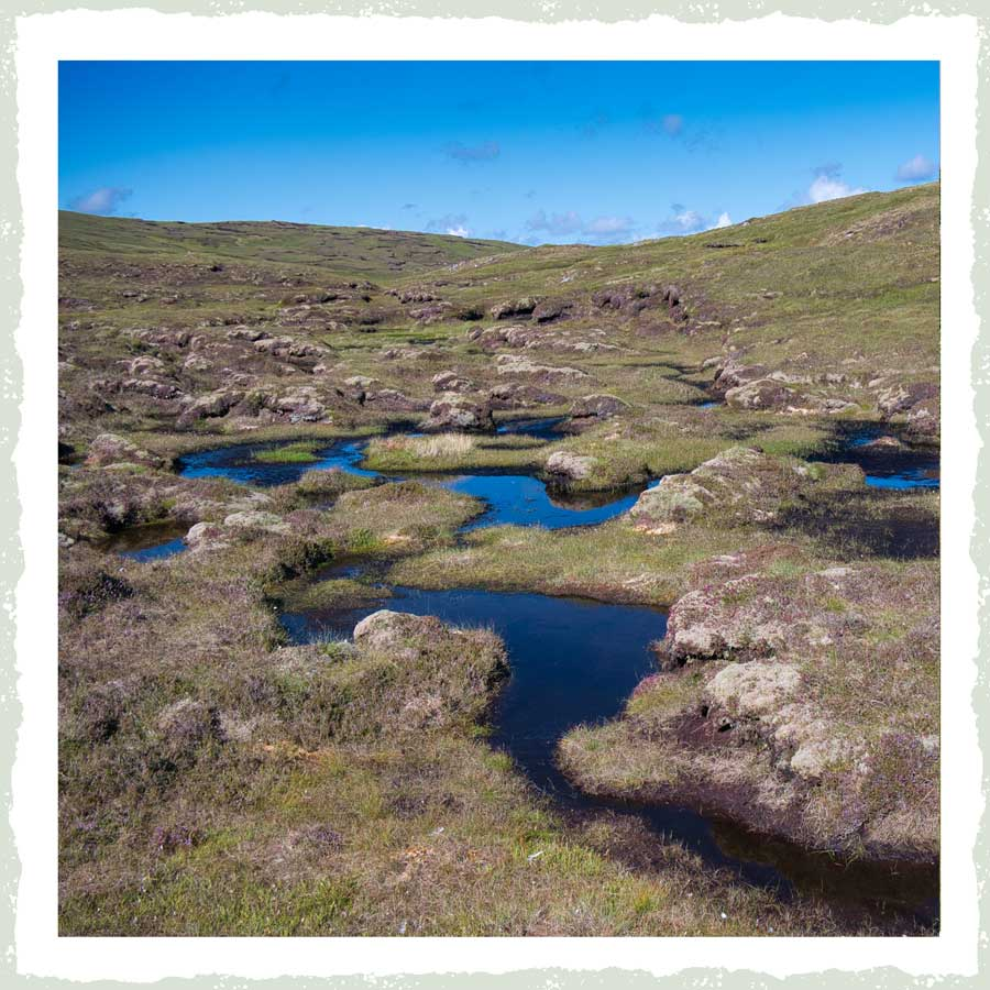 Peat free | Wild about Bath