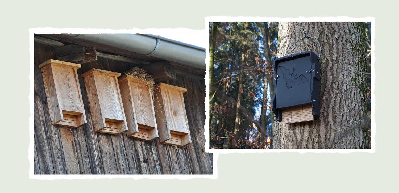 Bat boxes | Wild about Bath
