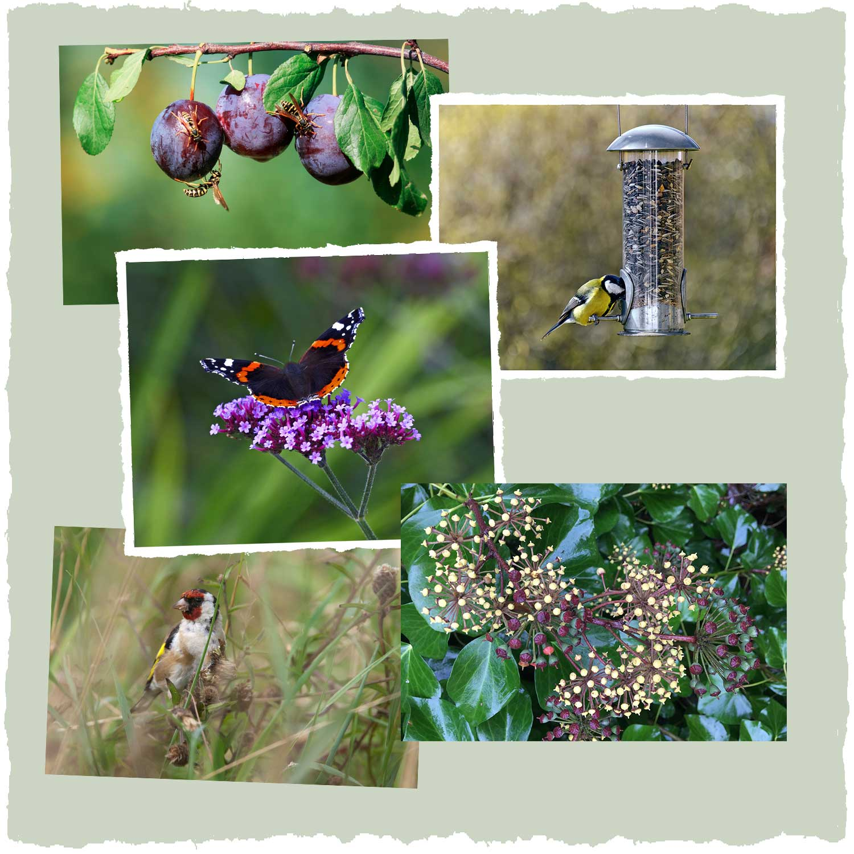 Wildlife food | Wild about Bath