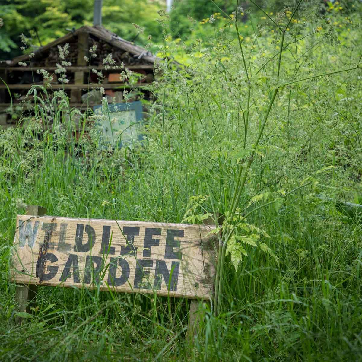 Wildlife Garden | Wild about Bath