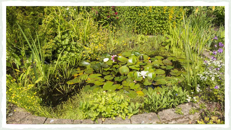 wildlife pond | Wild about Bath